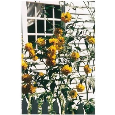 Window Breeze Book of Days