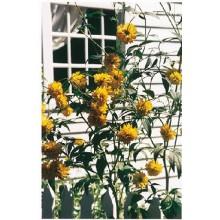 Window Breeze Journal